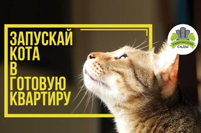 Запускай кота в готовую квартиру - акции, Таировские Сады, фото